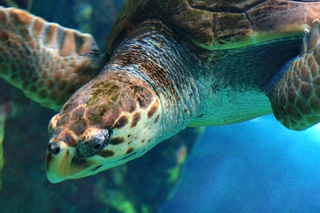 sea ​​turtle photo