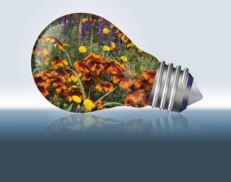flowers in a light bulb Stock Photo