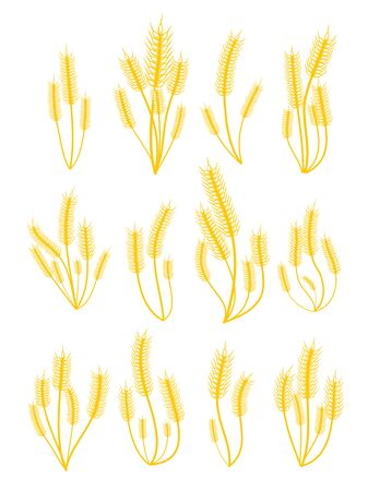 Set of various bunches of golden wheat isolated on white background. Vector illustration for your graphic design. Banque d'images - 130022373