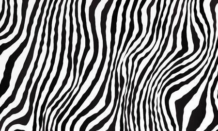 Monochrome black and white background. Zebra pattern backdrop. Vector illustration for your graphic design.
