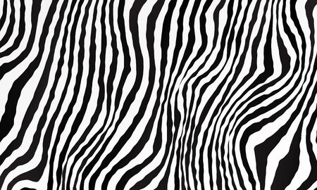 Monochrome black and white background. Zebra pattern backdrop. Vector illustration for your graphic design.