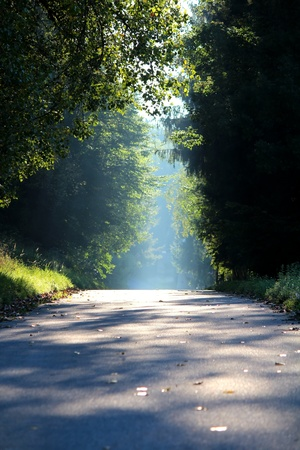 dirt road: Road in the countryside that leads passing a dark forest into the light