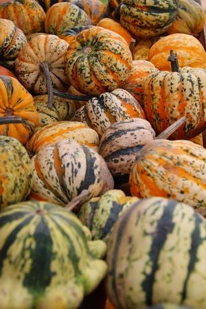 Littel pumpkins representing harvest time in autumn photo