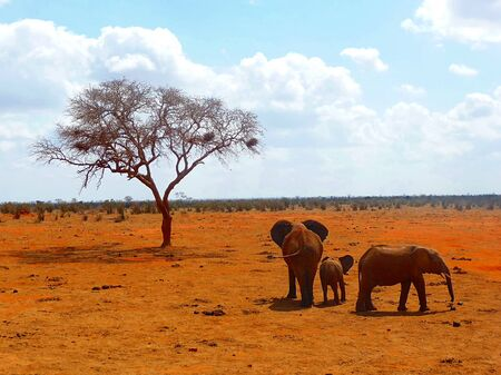 A elephant familiy with fahter son or daughter and mother Stock Photo - 10983710