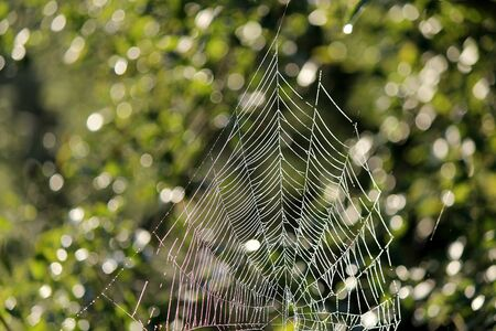 web2: A Cobweb in the morning dew in front of green plants