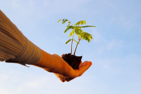 accretion: Plant in a hand in front of a blue sky Stock Photo