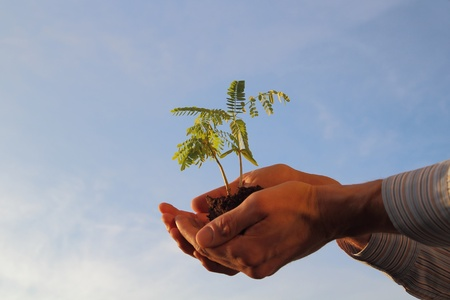 grown ups: Plant in a hand in front of a blue sky Stock Photo