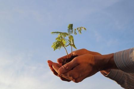 Plant in een hand voor een blauwe hemel Stockfoto