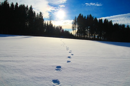 ski traces: Footprints in the snow Stock Photo