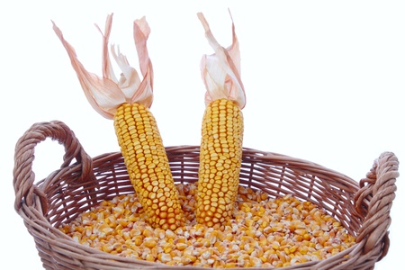 mais: Mais grain in a basket with corn on a crob