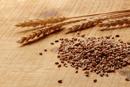 dietary fiber: Wheat corn and wheat spikes