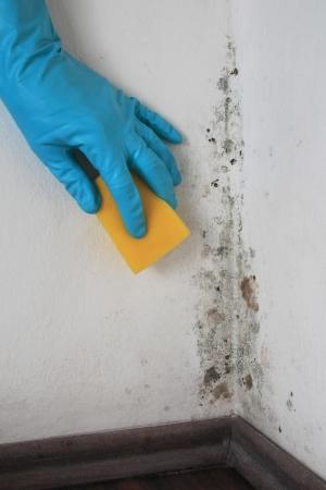 esporas: Eliminaci�n de moho de una pared en una habitaci�n con Alcohol Foto de archivo