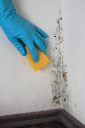 basement: Removing Mold from a Wall in a room with Alcohol Stock Photo