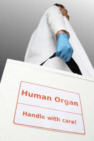 organos: Doctor con caja para el trasplante de �rganos