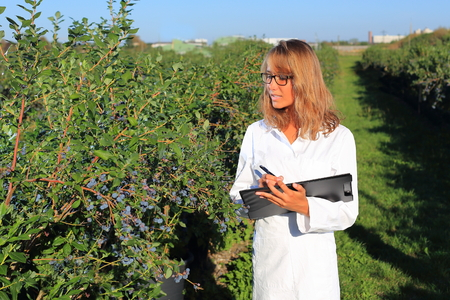 blueberry: A Woman as a inspector on a food plantation Stock Photo