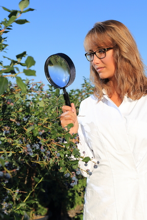 food inspection: Woman doing Food inspection quality control with magnifying glass
