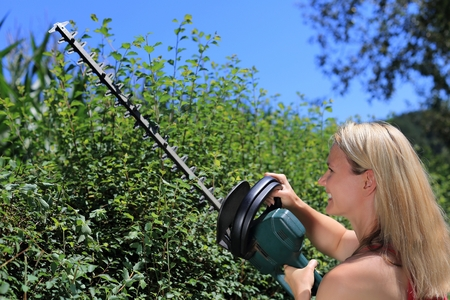 electric trimmer: A Woman cutting a  hedge Stock Photo