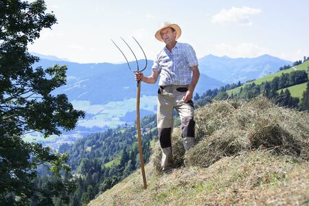 Ein Bergbauer mit Heugabel, das Heu erntet Standard-Bild - 84876770