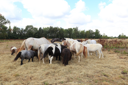 A Herd of Horses and ponys at a paddock Imagens