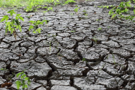 A Dried earth soil with cracks an green plants Banco de Imagens