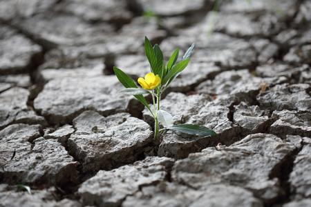 A Flourishing flower fighint through dried earth soil