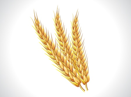 abstract wheat ears  illustratioin