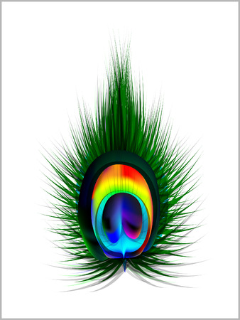 peacock design: Vector Peacock Feather illustration  Illustration