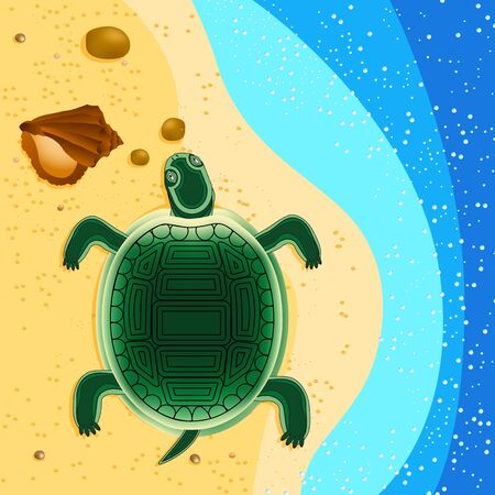 postpone: turtle crawls to sail in the sea shells on the sand and stones