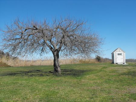bare tree with shed on field of grass Фото со стока