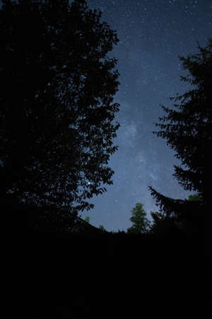 Milky way seen through the forest trees