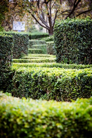 bushes at the entrance to the University of Oxford Botanic Garden frequently visited by Lewis Carroll and J.R.R. Tolkien