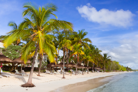 Beds and umbrellas on a beach with palm trees