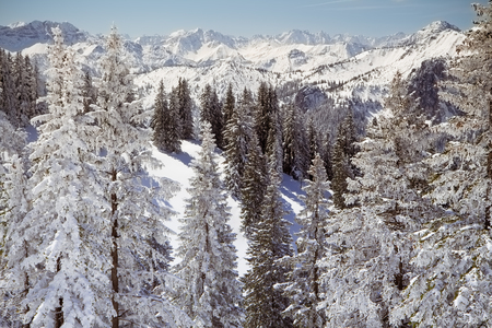 Fir trees covered with snow on the slopes of Tegelberg mountain in Bavarian Alps, Germany