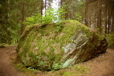 A huge bolder covered with green moss in softwood forest, Finland, June 2012