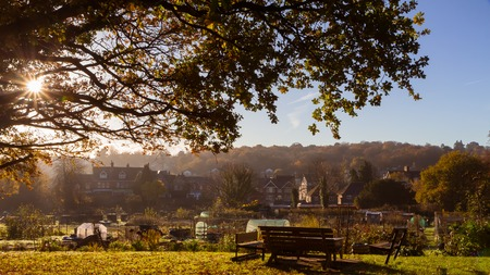 sunny morning, bench standing in the garden under a tree, typical english town sen in the distance