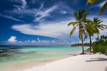 Palms on tropical beach in Mauritius Island, Indian Ocean Reklamní fotografie