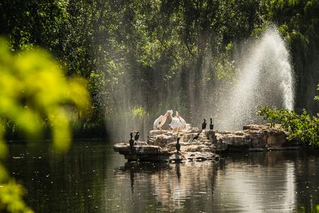 Pelicans in St. Jamess Park Reklamní fotografie