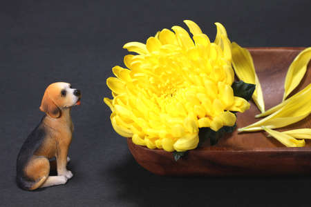 Yellow chrysanthemum flower and dog Figurine Imagens