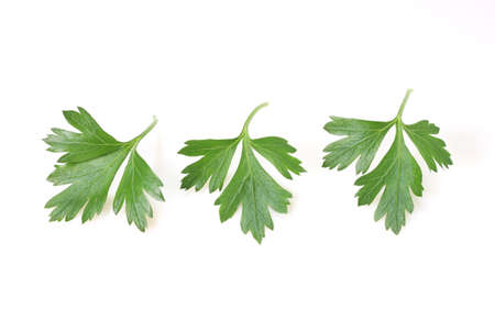 Fresh green Italian parsley on white background