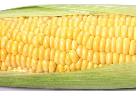 Fresh corn on cob close up