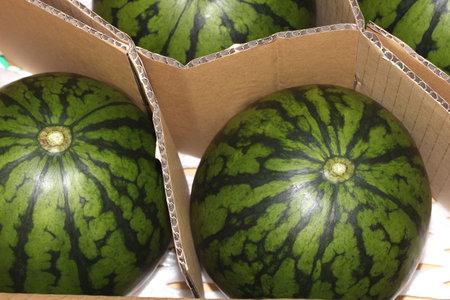 Small watermelons in a cardboard box Banco de Imagens