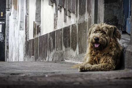 Street brown dog, average size posing on an old porch. Street photography Standard-Bild