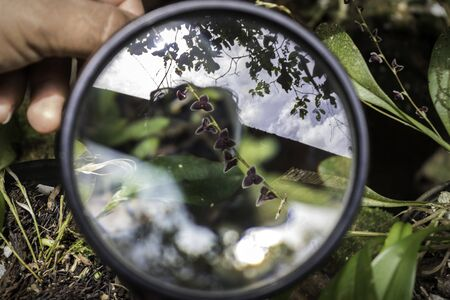 Microscopic orchids found in Ecuador seen through magnifying glass