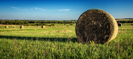 fields full of bales of hay