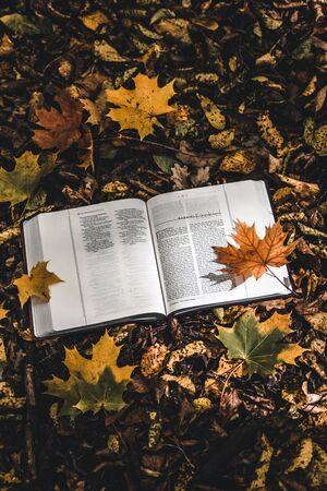 Holy Bible on top of fallen autumn leaves. Zdjęcie Seryjne