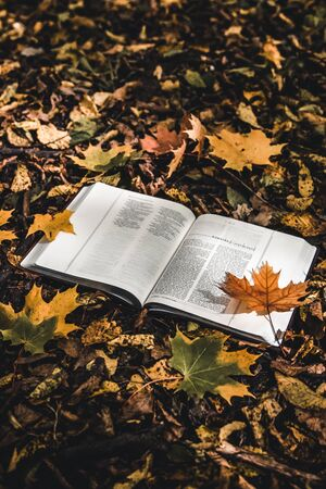 Holy Bible on top of fallen autumn leaves. Stock Photo