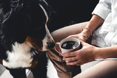 Woman Hand holding a cup of coffee and a Bernese Mountain Dog dog sniffs whats in the cup
