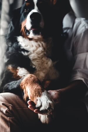 Young beautiful woman hugging her pet - dog at home. Close up portrait. Bernese Mountain Dog