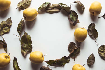 Yellow apples on a white background with old leaves, wholesome food, farming, vegetarian 版權商用圖片
