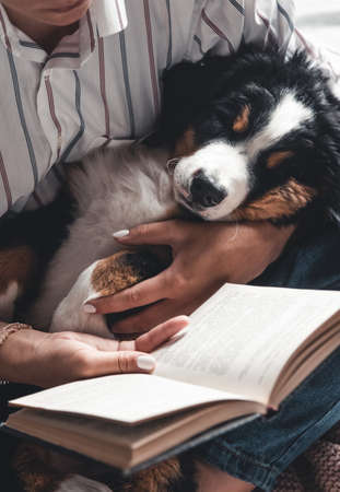 woman and dog lifestyle image. Bernese Mountain Dog is sleeping in his arms. Stock Photo